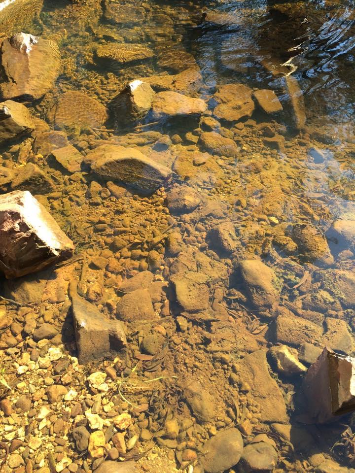 Algae around the pipe at Deep Springs